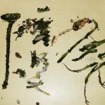 Yangjiang Group  (5)