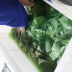 dying paper (7)