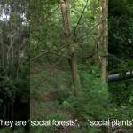 Xu tan Social Plants (4)