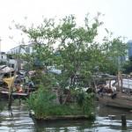23th July 2013, Lijiao village Guangzhou01