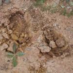 soil research02